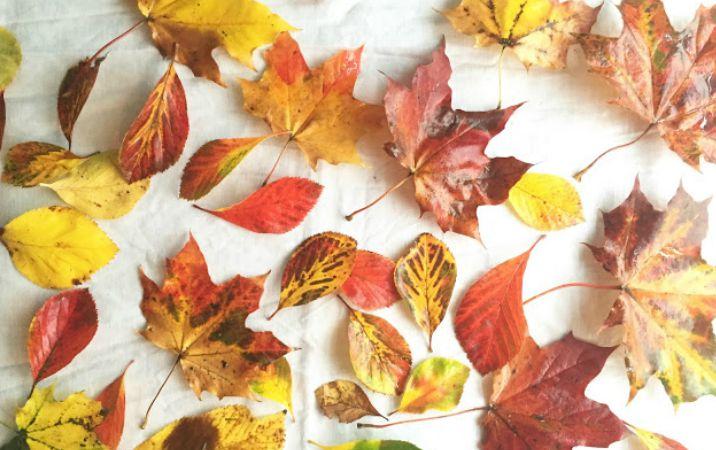 Autumn Styling Challenge