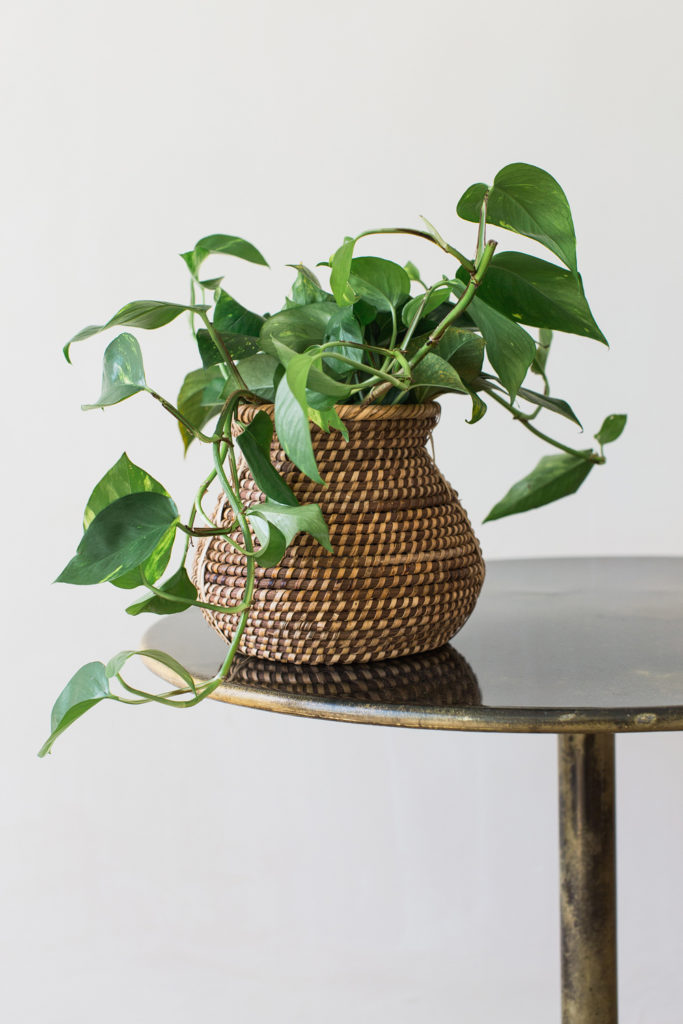 Textured Basket as Plant Pot